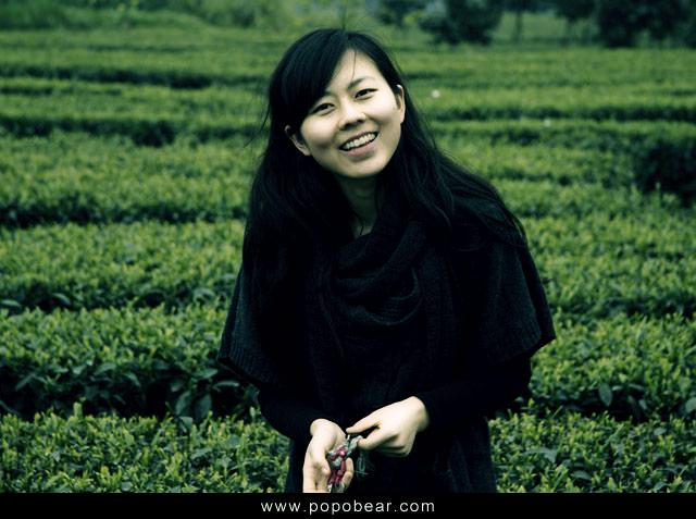 清明节采茶