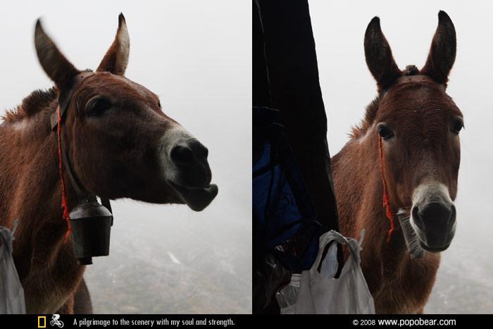 驴子笑 天下雨