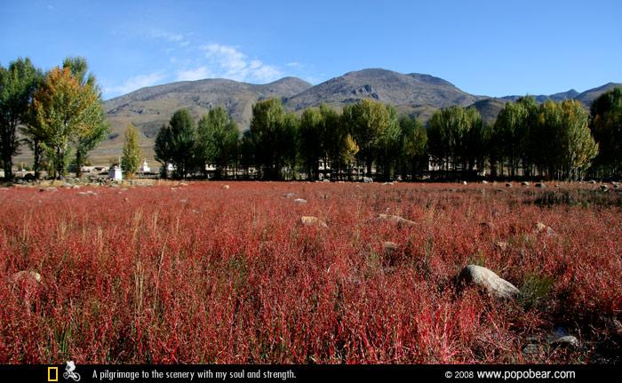 桑堆的红草地