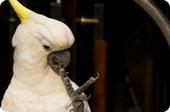 我是鹦鹉 不是白鹭